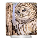 Barred Owl Watch Shower Curtain