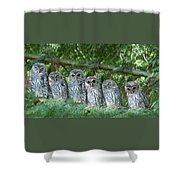 Barred Owlets Nursery Shower Curtain by Jennie Marie Schell