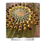 Barrel Cactus Bearing Fruit At El Mirador Rv Resort In San Carlos-sonora-mexico Shower Curtain