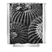 Barrel Cactus Poster Shower Curtain