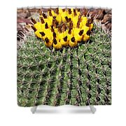 Barrel Cactus With Yellow Fruit Shower Curtain