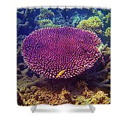 Barrier Reef Coral II Shower Curtain