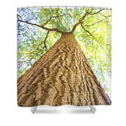 Bartrams Tree Shower Curtain