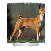 Basenji Dog Shower Curtain