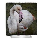 Bashful And Shy Flamingo. Shower Curtain