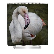 Bashful And Shy Flamingo. Shower Curtain