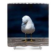 Bashful Seagull  Shower Curtain
