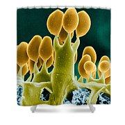 Basidiomycota Sem Shower Curtain by Biophoto Associates