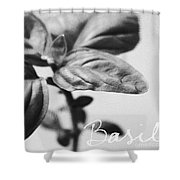 Basil Shower Curtain by Linda Woods
