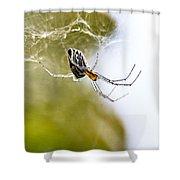 Basilica Orb Weaver Shower Curtain