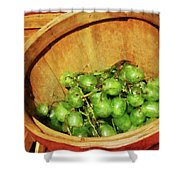 Basket Of Green Grapes Shower Curtain by Susan Savad