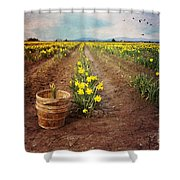 basket with Daffodils Shower Curtain