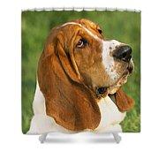 Basset Hound Dog Shower Curtain