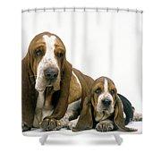 Basset Hound Dogs Shower Curtain