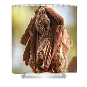 Sleeping Bat Shower Curtain