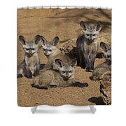 Bat-eared Fox Pups Shower Curtain