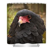 Bateleur Eagle Zimbabwe Shower Curtain