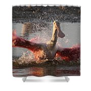 Bath Time - Roseate Spoonbill Shower Curtain