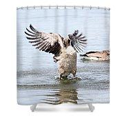 Bath-time Fun Shower Curtain