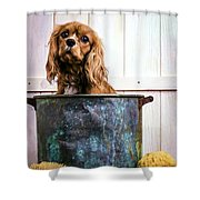 Bath Time - King Charles Spaniel Shower Curtain by Edward Fielding