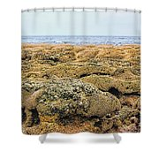 Sabellariid Worm Reef  Shower Curtain