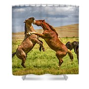 Battling Stallions Shower Curtain