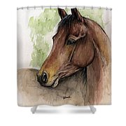 Bay Horse Portrait Watercolor Painting 02 2013 A Shower Curtain