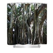Bayan Tree Shower Curtain