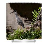 Bayou Bird Shower Curtain