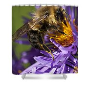 Be My Bee... Shower Curtain