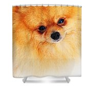 Be My Valentine Shower Curtain by Jenny Rainbow