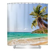 Beach And Palm Tree Shower Curtain