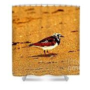 Beach Bird 1 Shower Curtain
