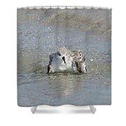 Beach Bird Bath 2 Shower Curtain