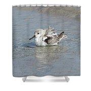 Beach Bird Bath 4 Shower Curtain