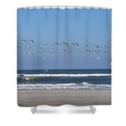 Beach Birds In Flight Shower Curtain