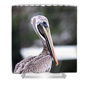 Beach Bum - Pelican Shower Curtain