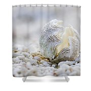 Beach Clam Shower Curtain