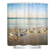 Beach Combers - Seagull Art By Sharon Cummings Shower Curtain by Sharon Cummings