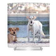 Beach Dogs Shower Curtain