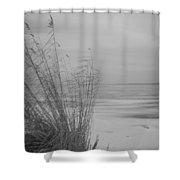 Beach Grass In The Snow Shower Curtain