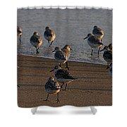 Beach Meeting Shower Curtain