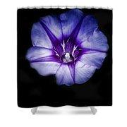 Beach Morning Glory Purple Shower Curtain