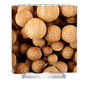 Beach Mushrooms Shower Curtain