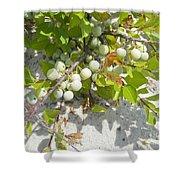Beach Plum - Prunus Maritima - Island Beach State Park Nj Shower Curtain