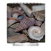 Beach Shells 3 Shower Curtain