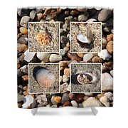 Beach Shells And Rocks Collage Shower Curtain by Carol Groenen