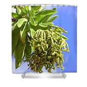 Beach Tree Seed Pods Shower Curtain