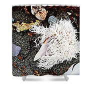 Beach Wares - Shells - Feather Shower Curtain
