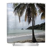 Beach With Palm Tree Shower Curtain